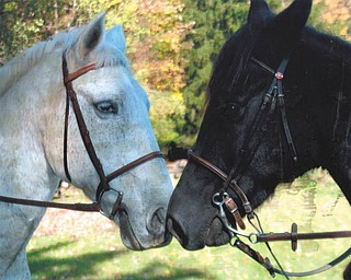 Lana VanAuker of Canfield loves shooting pictures of these horses, owned by her sister, Linda Vaughn.
