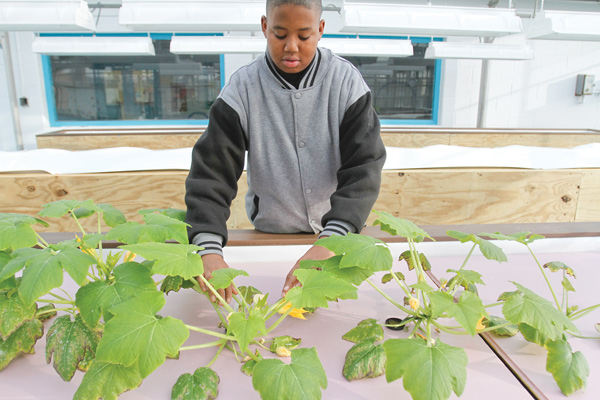 Antwan Anderson, a student at Choffin Career and Technical Center, checks his squash plants that are thriving in beds at the school. The plants are part of the aquaponics program. Aquaponics is the raising of fish and plants in a closed ecosystem.