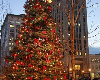 William D LEwis  The Vindicator   City Christmas tree.