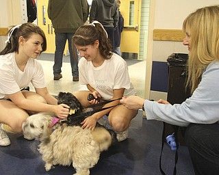 William D. Lewis the Vindicator Wilmington  cheerleaders Katelyn Corner, left, and Emily Reed, both 10th graders, pet therapy dogs while school pyschologist Dr. Cynthia Wright looks on during a basket ball game Saturday 1-5-13 at Wilmington shools. A student was killed in a traffic accident Friday and a large crowd turned out at the basketball game.