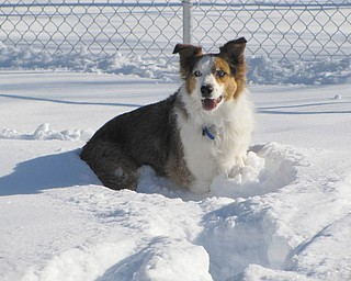 Shelby is all smiles playing in the snow. Christopher Toth of Austintown is Shelby's owner. The photo was submitted by Barbara Toth.