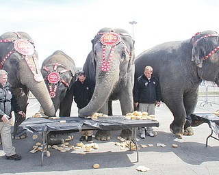 Four elephants with Ringling Bros. and Barnum & Bailey circus devour white bread, rolls and bagels on their way to an easy food-eating victory over three Youngstown police officers and an official with the city's police athletic league who ate doughnuts.