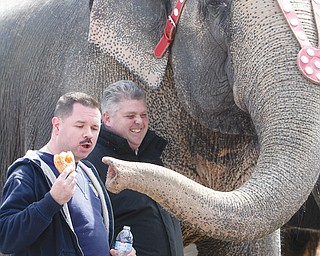 Youngstown police Patrolman Joe Moran tries to keep an elephant from eating his doughnut during a food-eating contest Thursday. Eventually, Moran gave the doughnut to the elephant.