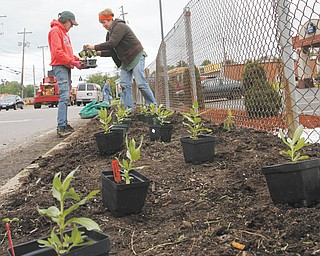 Liberty Trustee Jodi Stoyak, left, and Janet Yaniglos begin to arrange zinnia plants in a flower bed on Liberty Street in the township. Stoyak and Yaniglos are members of Liberty in Bloom, an organization that depends primarily on volunteers and donations to beautify the community with flowers.