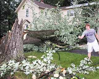Crispin Donahue of Gates Street, Cortland, starts to clear away a large maple tree that fell on his family's house. The tree, which fell about 3 a.m. Thursday during high winds and a thunderstorm, damaged the home's roof and a car.