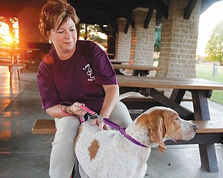 Paula Cipriano, a volunteer with Legacy Dog Rescue of Ohio, sits with Daisy, a year old English coon hound,