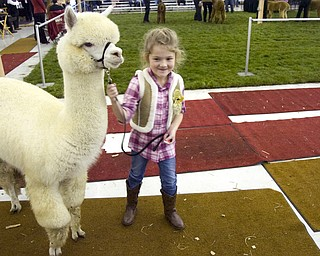 Kelli Cardinal/The Vindicator .Kylee Breiding, 6, from Seville, Ohio, walks Snow White, a huacaya alpaca from Hobby Horse Farms in Wadsworth, after winning a blue ribbon Saturday in the sub-junior showmanship class during Alpacafest at Eastwood Expo Center in Niles.