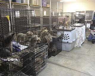 Some of the 105 dogs confiscated during the Jan. 17, 29014, raid at Terri Wylie's Smith Township property.