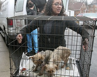 Animal Charity office manager Shalyses Bolash carries 2 of the 105 dogs confiscated during a raid at a Smith Township Benton home Jan. 17, 2014.