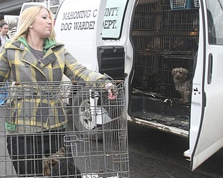 Kayley Frost of Mahoning County Animal Charity Humane Society carries 1 of the 105 dogs confiscated during a raid at a Smith Township home Jan. 1, 2014.