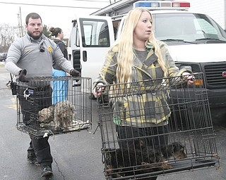 Kevin Hallquist, deputy dog warden, and Kayley Frost  of Animal Charity carry some of the 105 dogs confiscated during the Jan. 17, 2014, raid at Terri Wylie's Smith Township property.