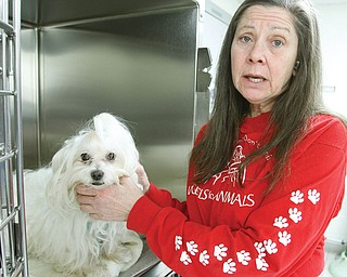 Diane Less, a co-founder of Angels for Animals in Beaver Township, comforts a Maltese mix after the dog underwent a spaying procedure. Angels for Animals is promoting Ban the Big Bellies 5, a World Spay Day event that offers low-cost procedures for pet owners who meet guidelines and others with financial need.