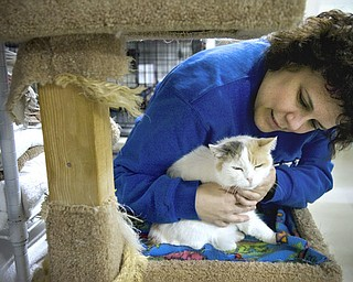 Kelli Cardinal/The Vindicator.Danielle DiLisio, from Warren, pets Crystal, a Dilute Calico, while perched in one of the rooms Monday night at Second Chance Animal Rescue in Austintown.