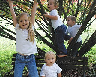 Laurie Fox was trying to get a nice photo of her four grandchildren sitting on a bench but was unsuccessful once they found that climbing the tree was more fun.  Ashlynn Mason, 5, is hanging from the branch, 1-year-old Jack Gaither is sitting on the bench, and 2-year-olds Ben Gaither and Cameron Mason are climbing in the background.