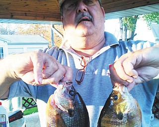 Bob Woychik sent this photo of Ohio Bluegills.