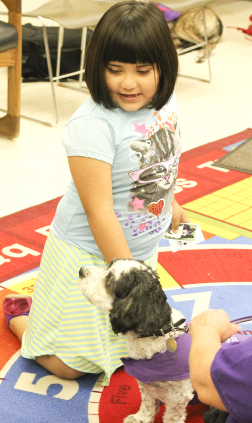 """Roxanna Flores-Kaufman (6) of Youngstown pets """"Max"""", a Shih-tuz/coton de Tuclear, at the Brownlee Woods branch of the Public Library of Youngstown on Saturday afternoon.   Dustin Livesay  