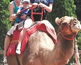 Tara Cioffi was enjoying the summer riding a camel at the Cleveland Zoo with her nephew and soon to be sister-in-law! It was on her bucket list - so we rode together for my birthday!  Tara Cioffi, Austintown and Mason Getz and Jen Ludke, both of Green Bay, Wis. Submitted by Tara Cioffi.