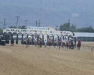 Katie Rickman   The Vindicator.Horses leave the gate at the West Virginia Derby August 2, 2014.