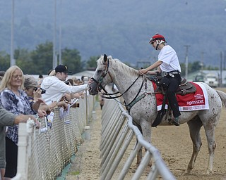 Katie Rickman   The Vindicator.Geoffrey Trees of Pittsburgh reaches over the fence to pet the outrider pony named Jake at the West Virginia Derby August 2, 2014.