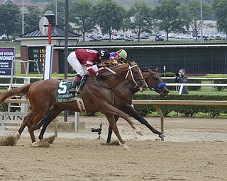 Katie Rickman   The Vindicator.Tapiture (number 5) slows down after crossing the finish line and beating Candy Boy making it the third time in the history of Mountaineer Race Track that a horse has won by a nose.
