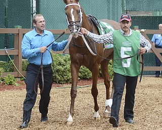 Katie Rickman   The Vindicator.Tapiture is led around the paddock prior to winning the West Virginia Derby June 2, 2014 by a nose.