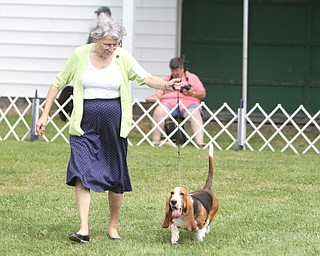 """Edna Morris of Pittsburgh walks around the rink with """"Emma"""" , Basset Hound, during the AKC All-Breed Dog show at the Canfield Fairgrounds on Saturday morning.  Dustin Livesay  