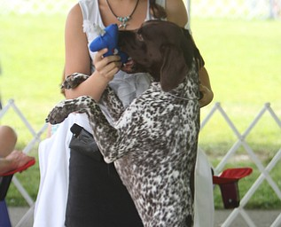"""Danielle Kunst (13) of Ford City, Pa celebrates with her 15 month old German Short Haired Pointer named """"Ace"""" during the AKC All-Breed Dog show at the Canfield Fairgrounds on Saturday morning.  Dustin Livesay  