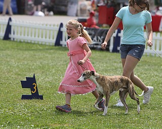 """Elise Patti (8) of Concord, Ohio runs with her 6-year-old Whippet """"Serious"""" during the AKC All-Breed Dog show at the Canfield Fairgrounds on Saturday morning.  Dustin Livesay  