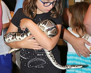 Maria Mastroberardino (9) of Struthers holds a Ball Python during the Reptile and Amphibian show at the Mill Creek Farm in Canfield on Sunday afternoon.   Dustin Livesay  |  The Vindicator  8/6/17  Canfield