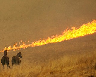 Flames from a wildfire approach a pair of horses in a field Monday, Oct. 9, 2017, in Napa, Calif. Wildfires whipped by powerful winds swept through Northern California early Monday, sending residents on a headlong flight to safety through smoke and flames as homes burned. (AP Photo/Rich Pedroncelli)