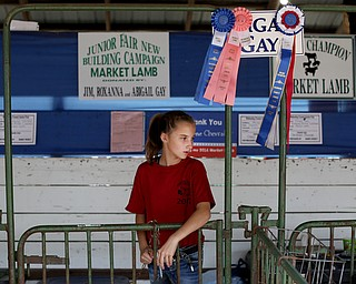 Abigail Gay(14) feeds her lambs at the 171st Canfield Fair, Thursday, August 31, 2017, at the Canfield Fairgrounds in Canfield. Abigail is donating one of her lambs to the Junior Fair New Building Campaign...(Nikos Frazier | The Vindicator)