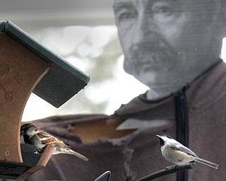 William D Lewis the Vindicator   A sparrow and a black capped chickadee feed near the Ford Nature Center in Mill Creek Park. A cardboard cutout of Mill Creek Park founder Volney Rogers is in background.