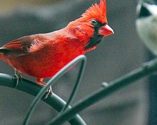 Birds In Mill Creek Park