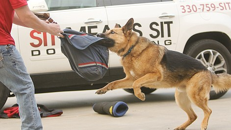 Mail carriers learn how to ward off dogs