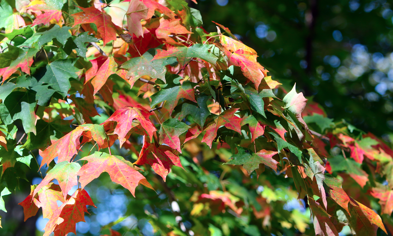 Peak fall colors in the Valley expected by week\'s end | vindy.com