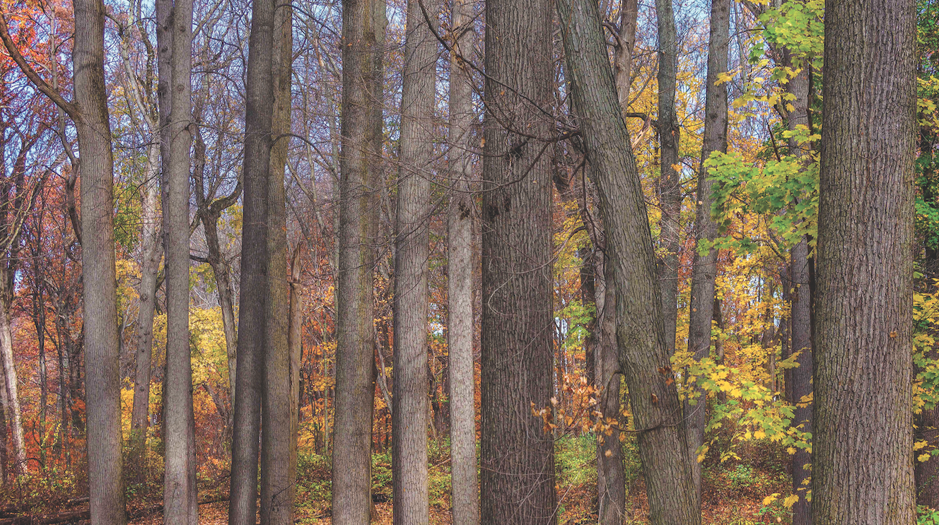 Hunters in Ohio check nearly 73K deer in weeklong hunting season