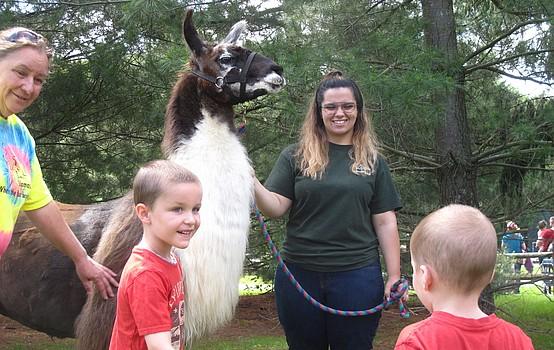 Preschoolers learn about llamas at Boardman park