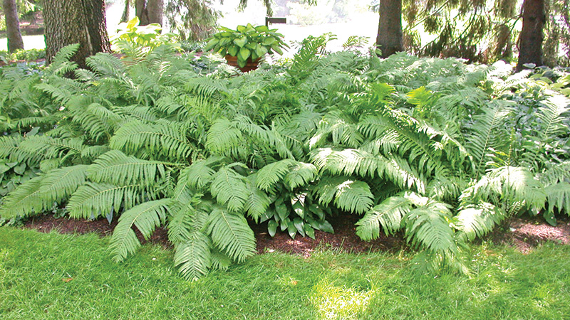 Fabulous Ferns From Dinosaurs Diet To Modern Gardens Vindycom