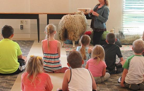 Austintown hosts sheep sheering demo