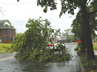 Fallen tree limb near YSU stadium blocks traffic on Fifth Avenue.