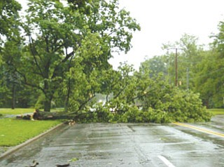 Tree blocks southbound lanes on Fifth between Redondo and Crandall.