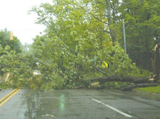 Traffic detoured to streets around Crandall Park to avoid tree.