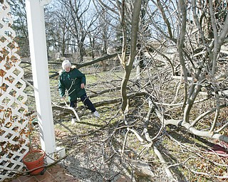 Susan Morgan surveys damage after  2 maple trees fell during early morning windstorm Wed. The trees fell on the deck and porch roof of her home on South Schenley in Youngstown. She was waiting for a tree service to clean up the downed trees.