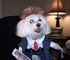 Donald Trump Your Fired Foxie Roxie Your Hired