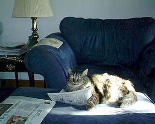 Brody reads the newspaper. Apparently The Vindicator appeals to some feline readers.