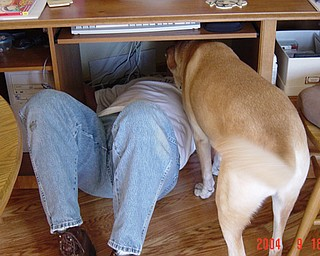 THE DOG HELPING FIX THE COMPUTER IS JAKE, HE WAS 8 YEARS OLD IN THE PICTURE AND HE IS PART YELLOW LAB AND PART GREYHOUND.  JUDI HICKOK, CANFIELD