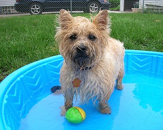 My pets names are Zoey (Carin Terrier), splashing around in her pool is her favorite when the weather is nice and Justus (German Shepard) who just loves to sleep on our bed. 