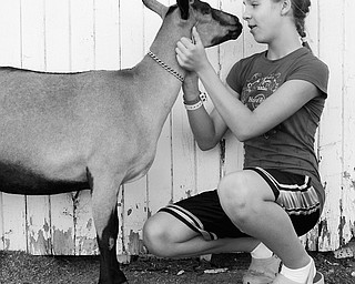 Goat Whisperer: Jenna Parry, 12, of Champion, gives her goat, Ivy, a pep talk before the livestock judging at the Trumbull County Fair on Friday, July 11, 2008.