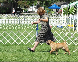 7.31.2008 Pat Luce walks her Chinese Sharpei, Jingles, in this dog's first competition.