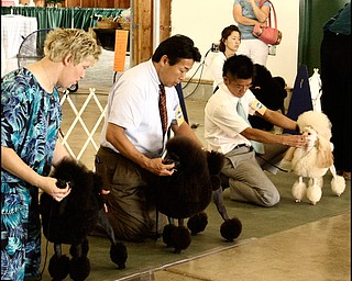 7.31.2008 Contestants and their owners compete in the 2008 dog show in Canfield.